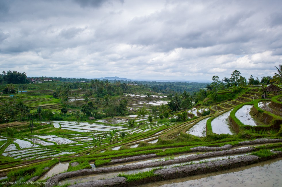 Chapter Thirty Two: Jatiluwih Rice Fields, Bali: July 2014