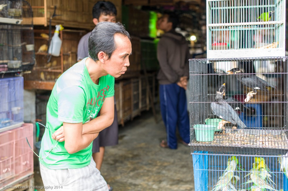 Chapter Thirty Four: Denpasar Badung Burung (Bird Market), Bali: July 2014